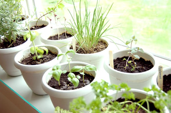 Indoor-herb-garden-1